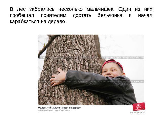 В лес забрались несколько мальчишек. Один из них пообещал приятелям достать б...