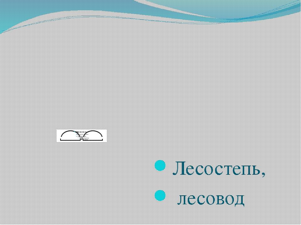 Лесостепь, лесовод Бокова С Ю НРСШ