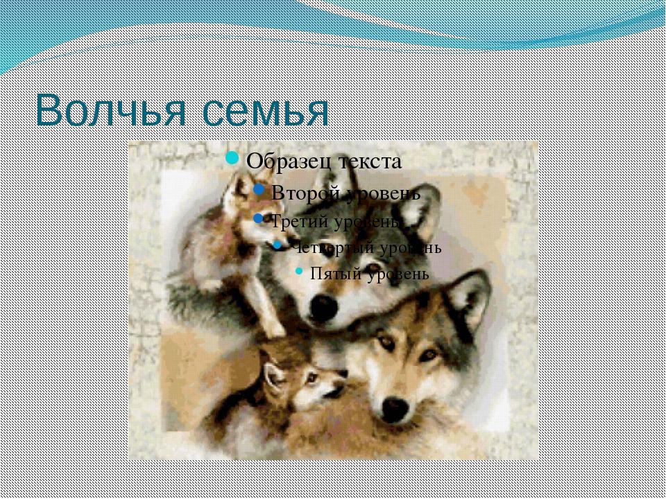 Волчья семья Бокова С Ю НРСШ