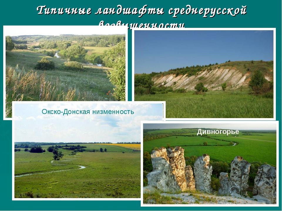 Типичные ландшафты среднерусской возвышенности Окско-Донская низменность Дивн...
