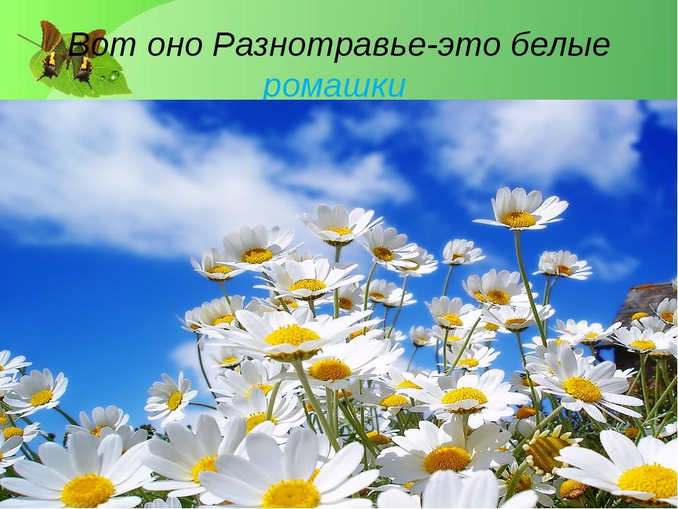 Вот оно Разнотравье-это белые ромашки Лукяненко Э.А. МКОУ СОШ №256 г.Фокино