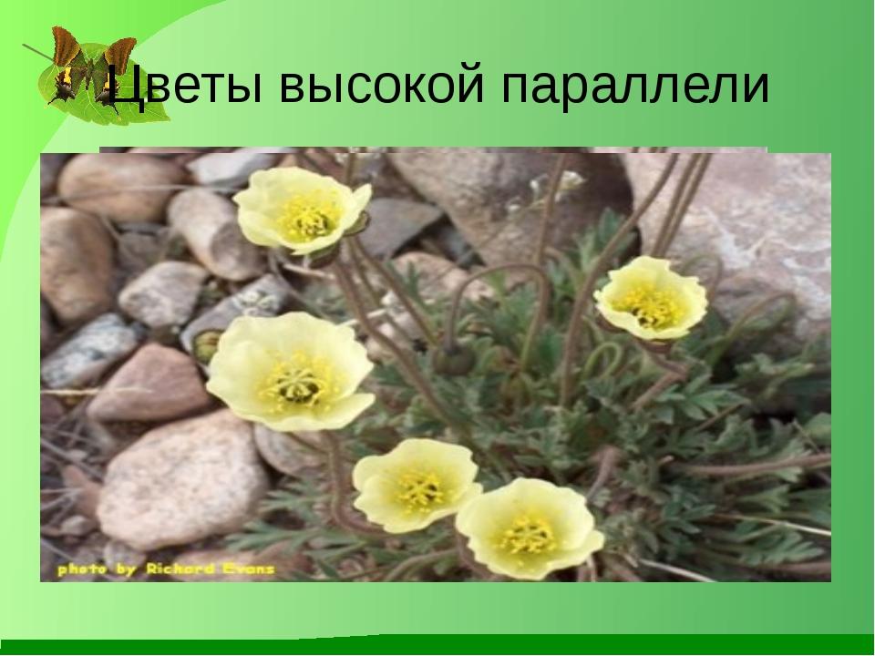 Цветы высокой параллели Лукяненко Э.А. МКОУ СОШ №256 г.Фокино