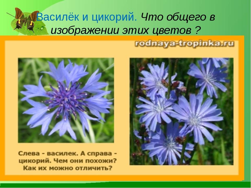 Василёк и цикорий. Что общего в изображении этих цветов ? Лукяненко Э.А. МКОУ...