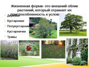 Жизненная форма- это внешний облик растений, который отражает их приспособлен