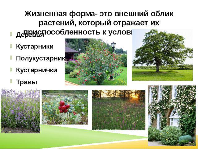 Жизненная форма- это внешний облик растений, который отражает их приспособлен...