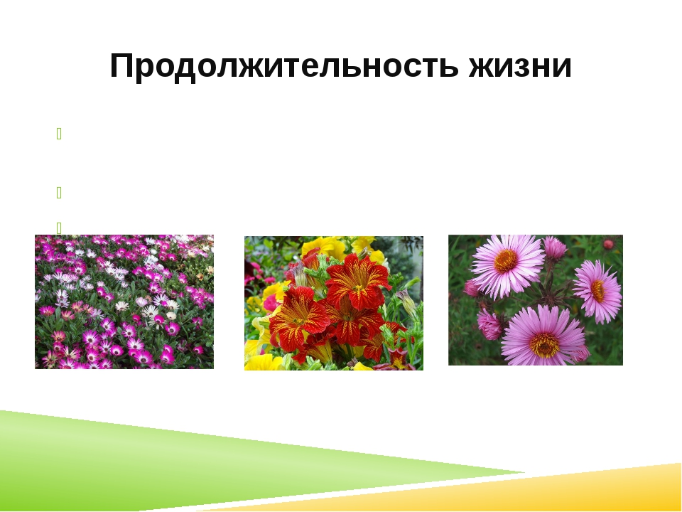 Продолжительность жизни Однолетние (календула, горох, укроп) Двулетние (морко...