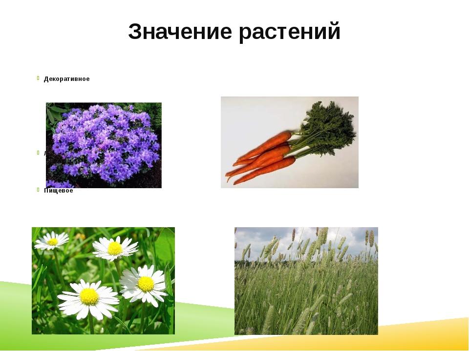 Значение растений Декоративное Лекарственное Пищевое Кормовое
