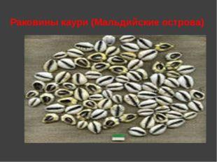 Раковины каури (Мальдийские острова)