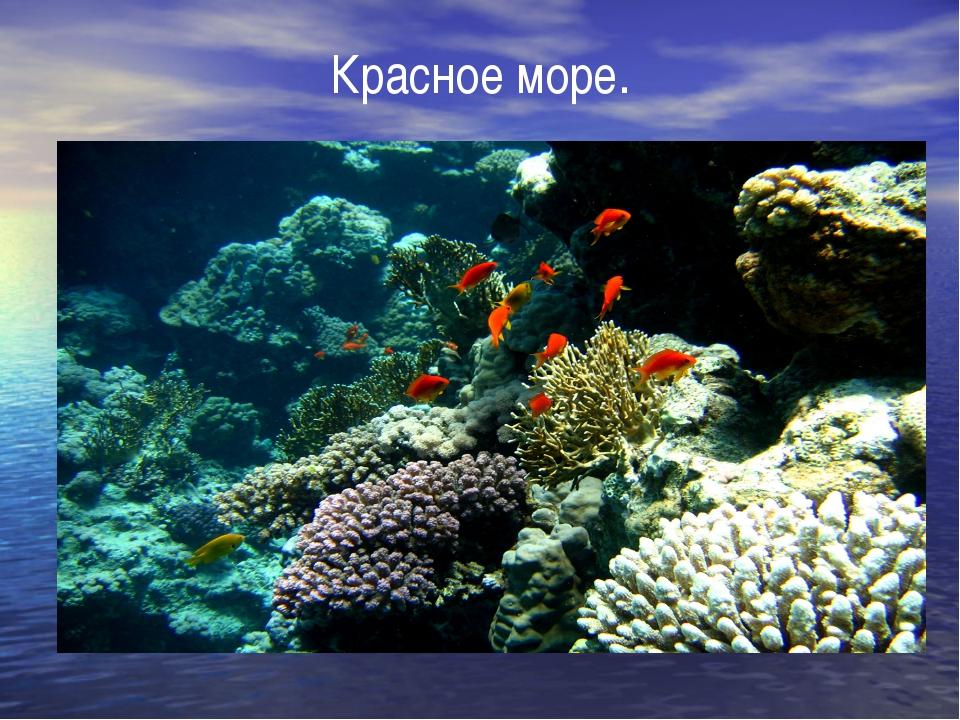 Красное море.