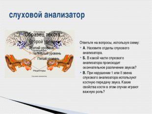 Ответьте на вопросы, используя схему: А. Назовите отделы слухового анализато