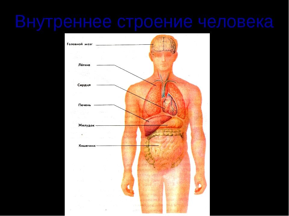 Картинка с описанием строение человека