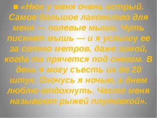 ■ «Нюх у меня очень острый. Самое большое лакомство для меня — полевые мыши.
