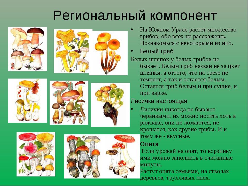 Региональный компонент На Южном Урале растет множество грибов, обо всех не ра...