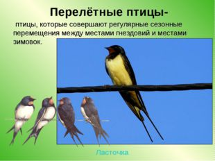 Перелётные птицы- птицы, которые совершают регулярные сезонные перемещения м