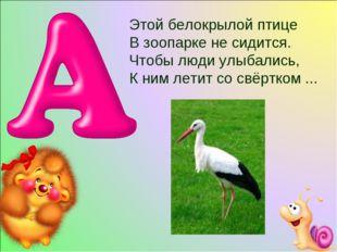 Этой белокрылой птице В зоопарке не сидится. Чтобы люди улыбались, К ним лети