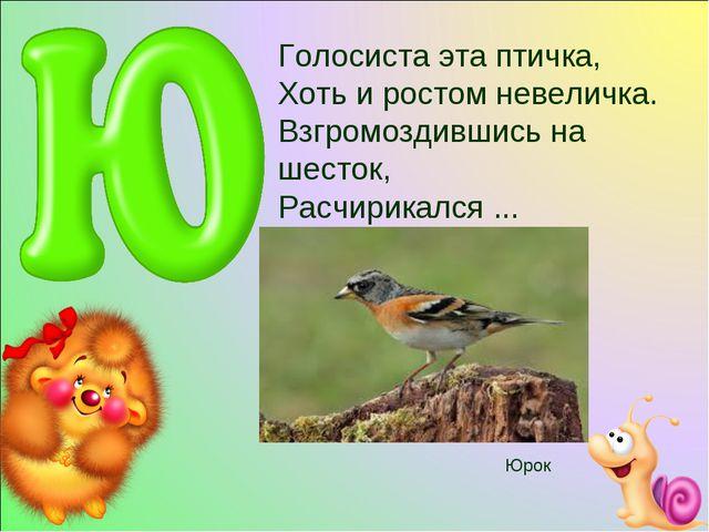 Голосиста эта птичка, Хоть и ростом невеличка. Взгромоздившись на шесток, Рас...