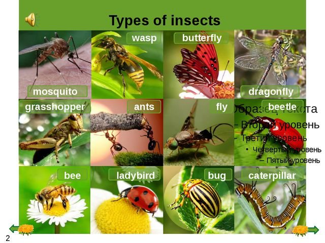 Types of insects mosquito wasp butterfly dragonfly grasshopper fly ants beet...