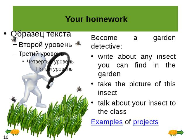 Your homework Become a garden detective: write about any insect you can find...