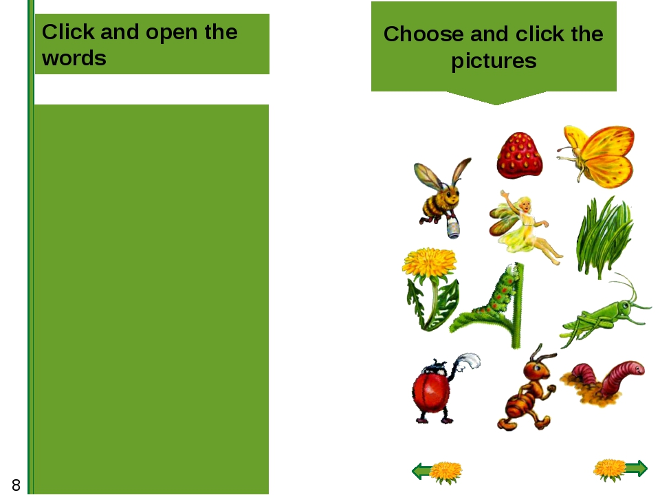 Choose and click the pictures Click and open the words grass dandelion caterp...
