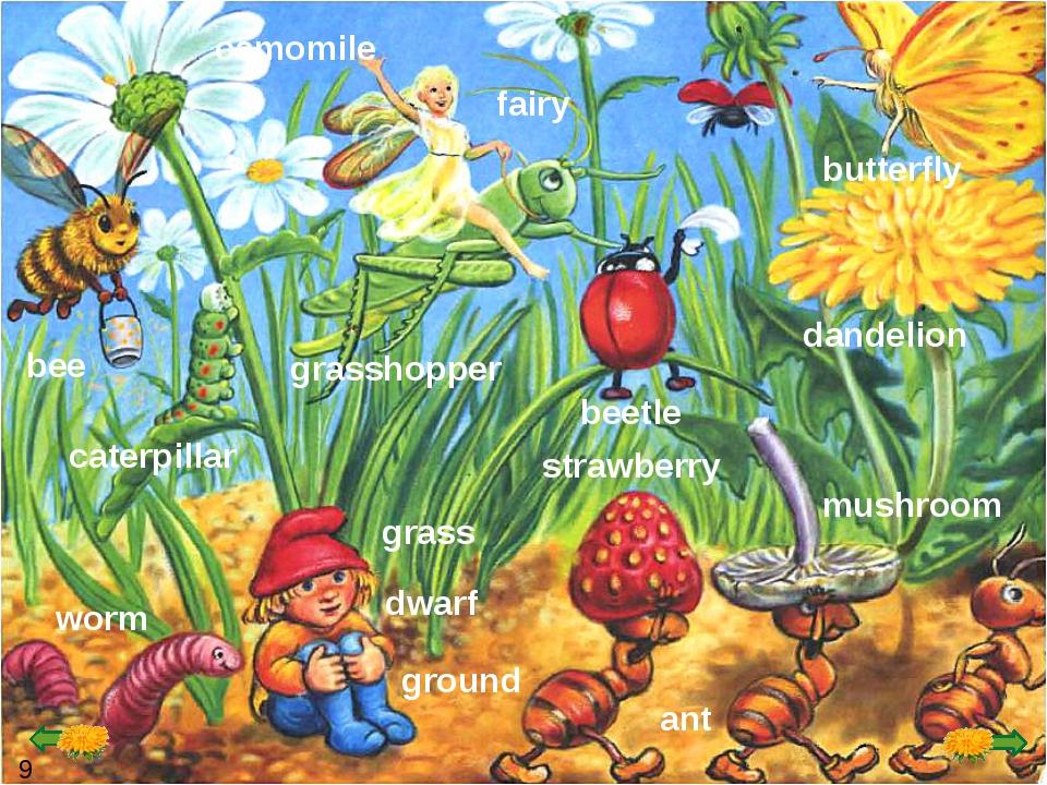 strawberry worm ground ant dandelion bee grass caterpillar grasshopper beetle...