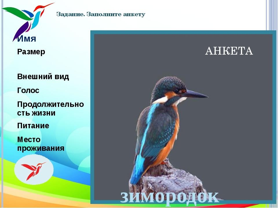 Задание. Заполните анкету АНКЕТА зимородок Имя Зимородок Размер Мелкая птица...