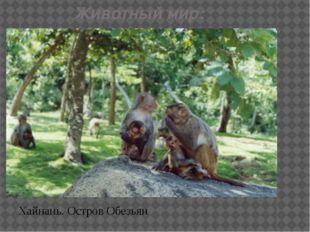 Животный мир: Хайнань. Остров Обезьян