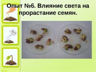 Опыт №6. Влияние света на прорастание семян.