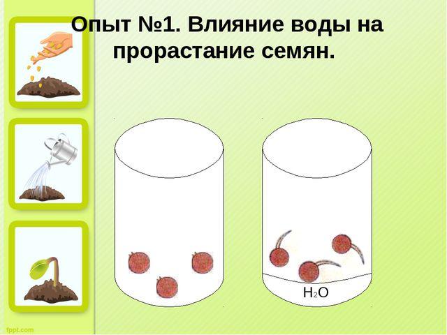 Опыт №1. Влияние воды на прорастание семян. H2O