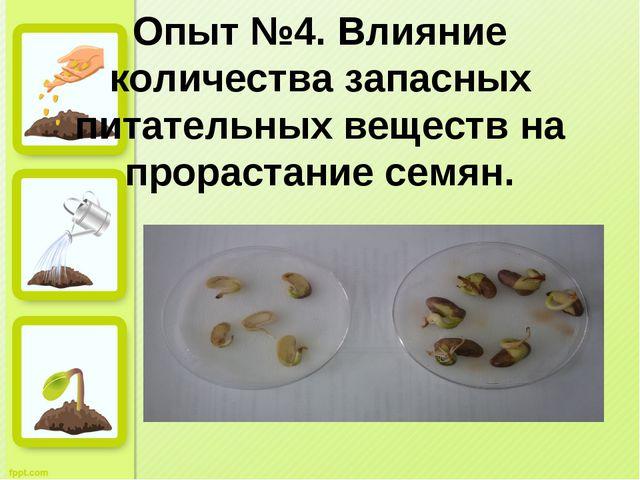 Опыт №4. Влияние количества запасных питательных веществ на прорастание семян.