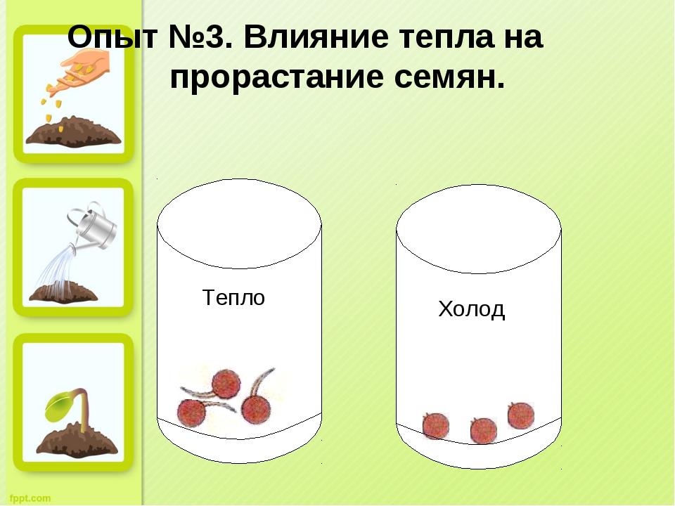 Опыт №3. Влияние тепла на прорастание семян. Тепло Холод