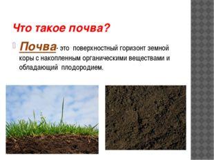 Что такое почва? Почва- это поверхностный горизонт земной коры с накопленным