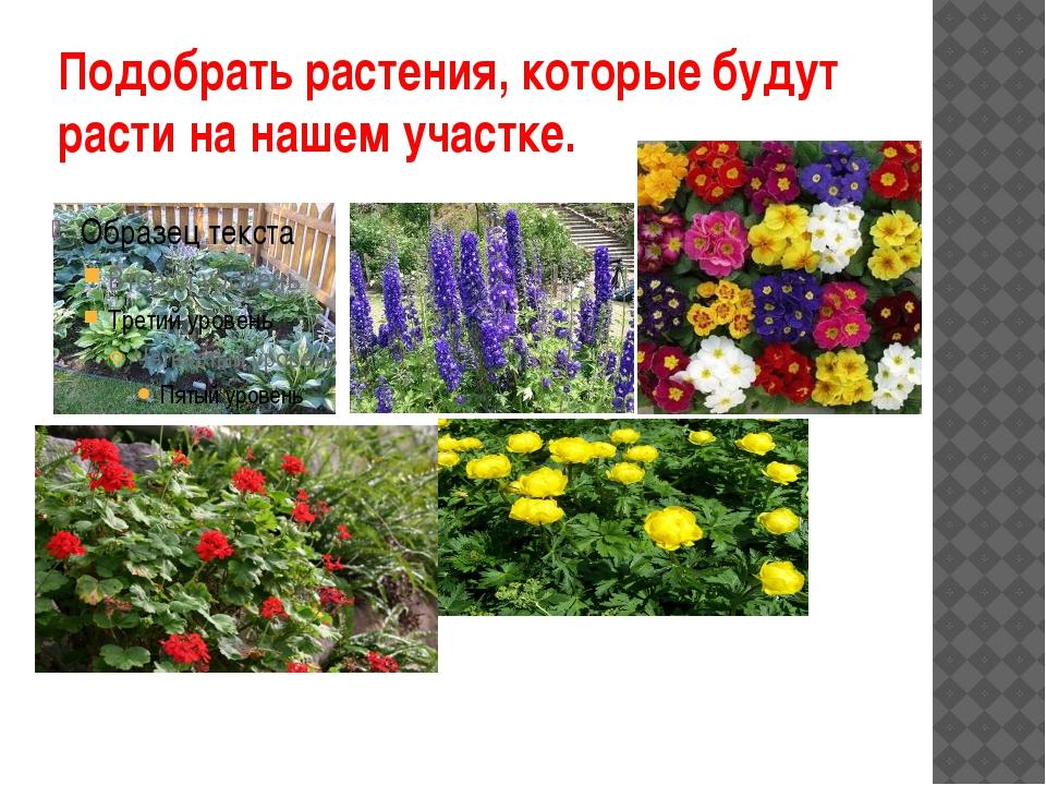Подобрать растения, которые будут расти на нашем участке.