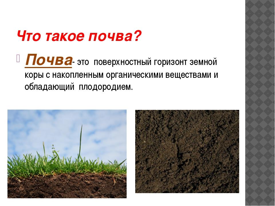Что такое почва? Почва- это поверхностный горизонт земной коры с накопленным...