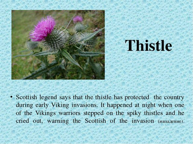 Thistle Scottish legend says that the thistle has protected the country durin...