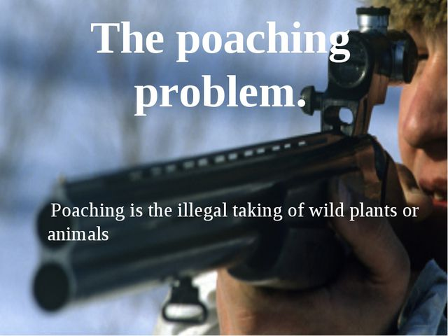 The poaching problem. Poaching is the illegal taking of wild plants or animals