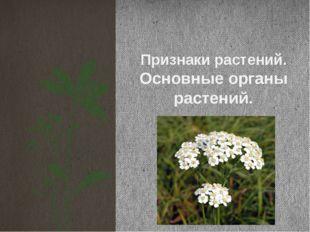 Признаки растений. Основные органы растений.