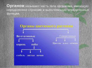 Органом называют часть тела организма, имеющую определенное строение и выполн