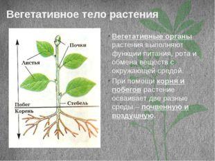 Вегетативное тело растения Вегетативные органы растения выполняют функции пит