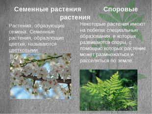 Семенные растения Споровые растения Растения, образующие семена. Семенные рас