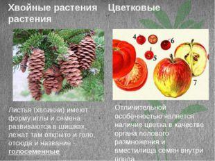 Хвойные растения Цветковые растения Листья (хвоинки) имеют форму иглы и семен