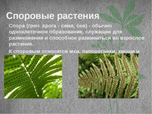 Споровые растения Спора (греч. spora - семя, сев) - обычно одноклеточное обра