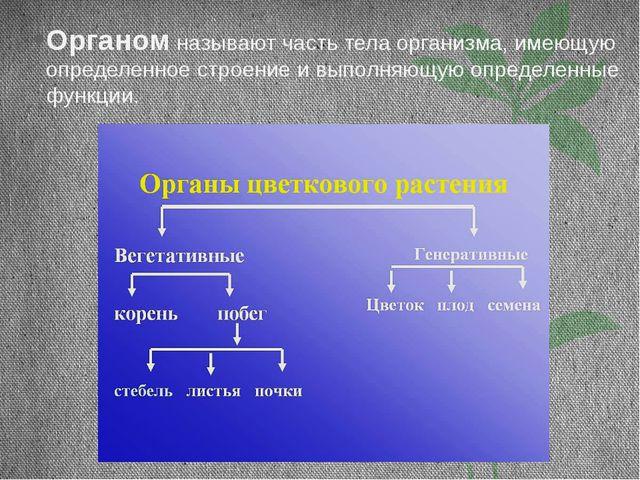 Органом называют часть тела организма, имеющую определенное строение и выполн...