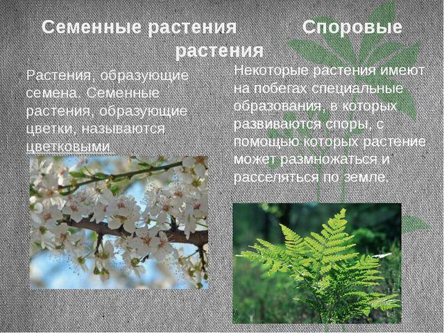 Семенные растения Споровые растения Растения, образующие семена. Семенные рас...