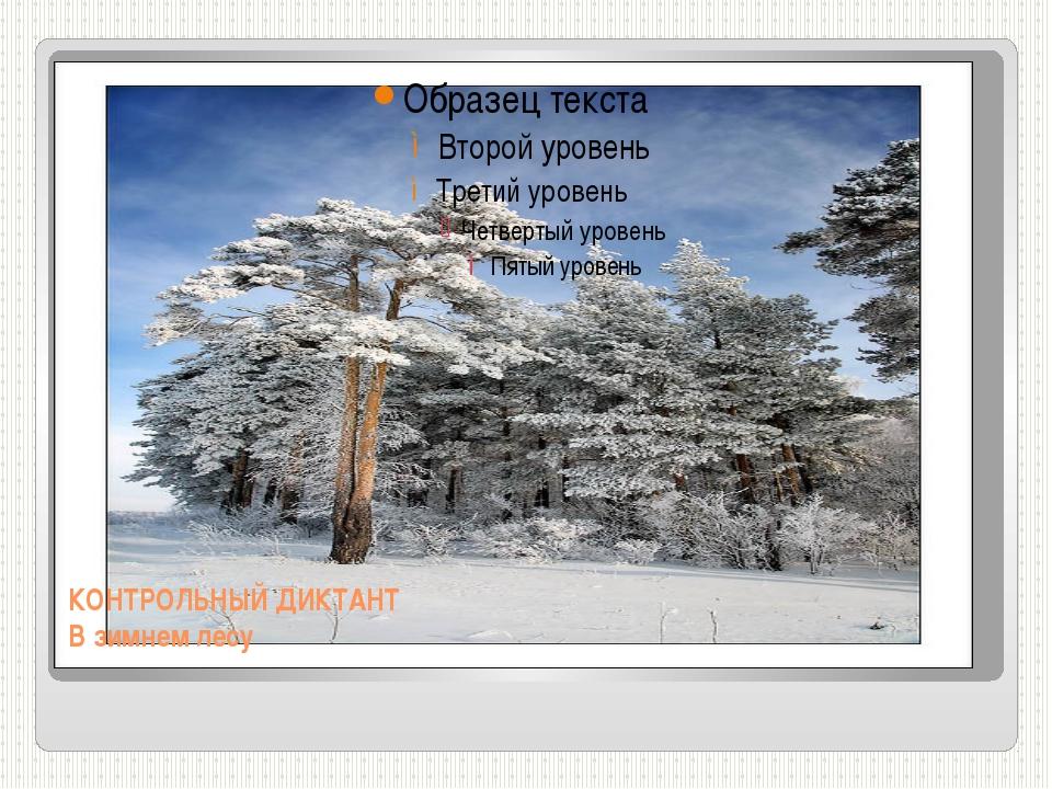 КОНТРОЛЬНЫЙ ДИКТАНТ В зимнем лесу