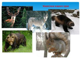 Животные нашего края