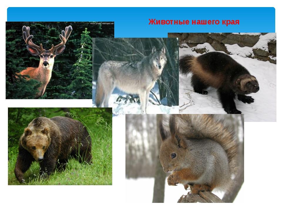 некоторых местах животные нашего края фото эверест