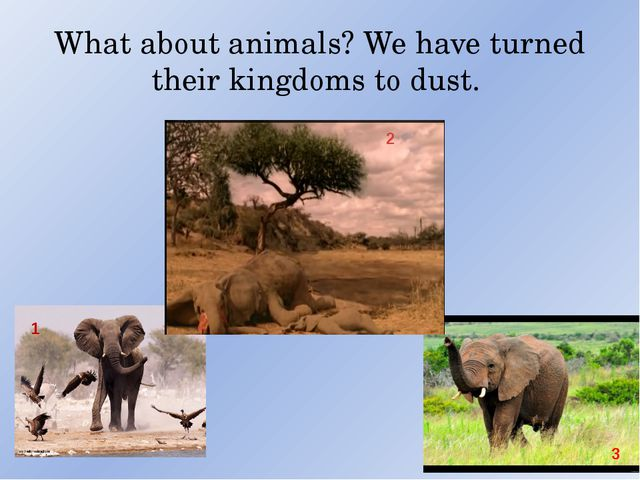 What about animals? We have turned their kingdoms to dust. 1 2 3