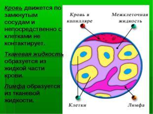 Кровь движется по замкнутым сосудам и непосредственно с клетками не контактир