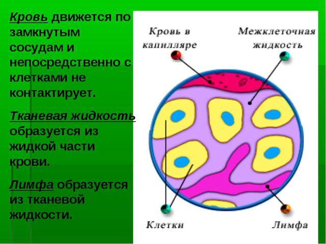 Кровь движется по замкнутым сосудам и непосредственно с клетками не контактир...