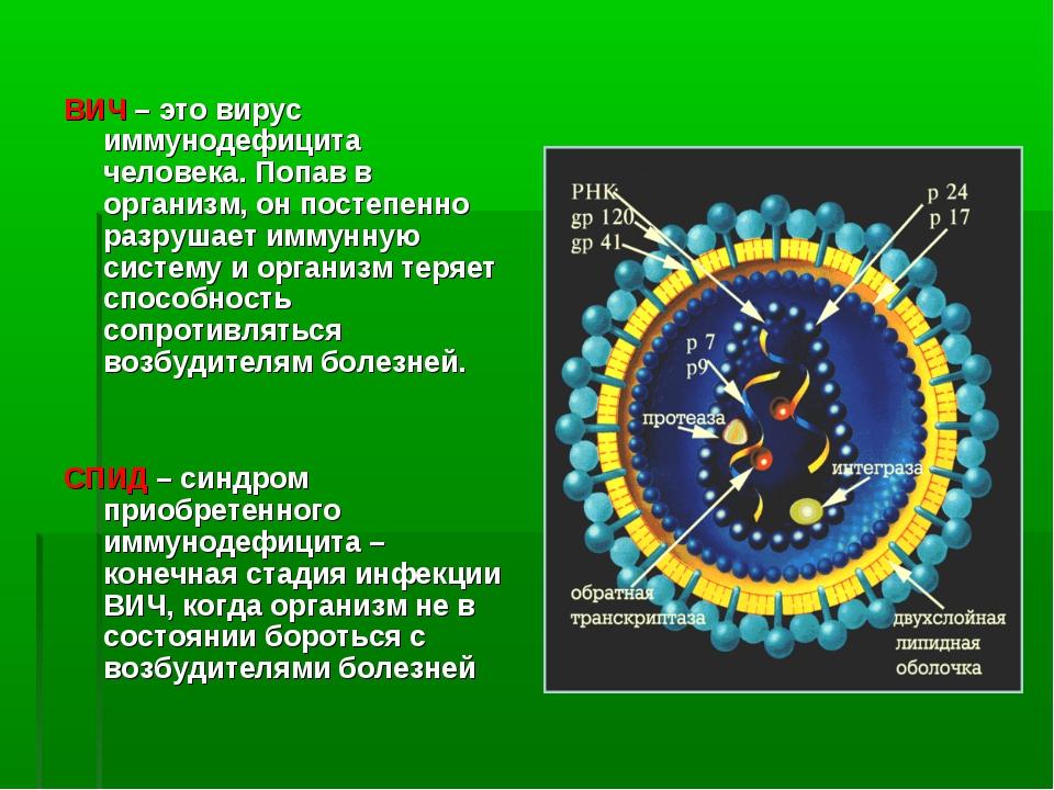 ВИЧ – это вирус иммунодефицита человека. Попав в организм, он постепенно разр...